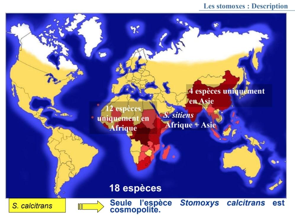 Carte sur la répartition des Stomoxes dans le monde