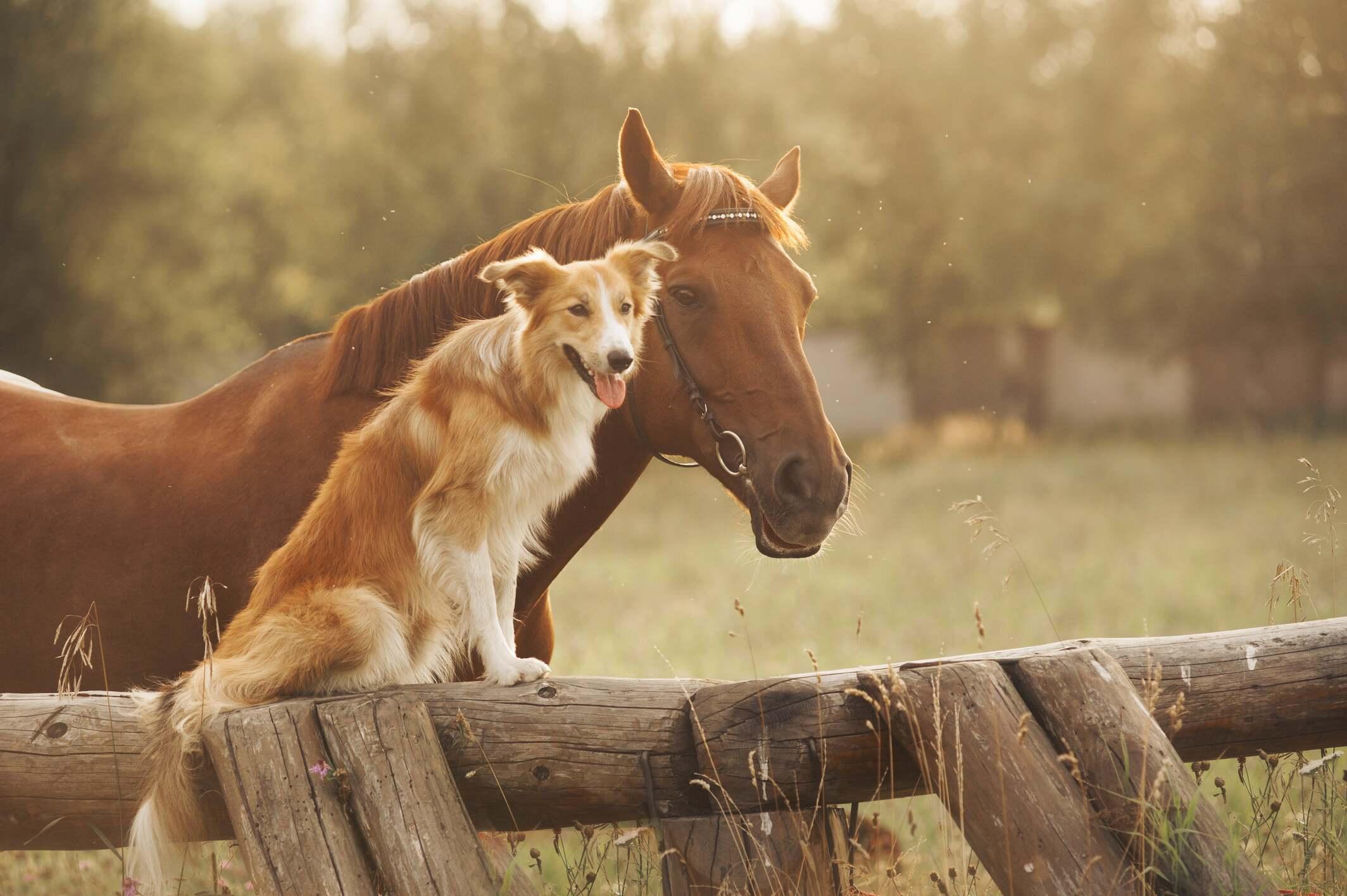 Protégez vos animaux avec notre gamme vétérinaire
